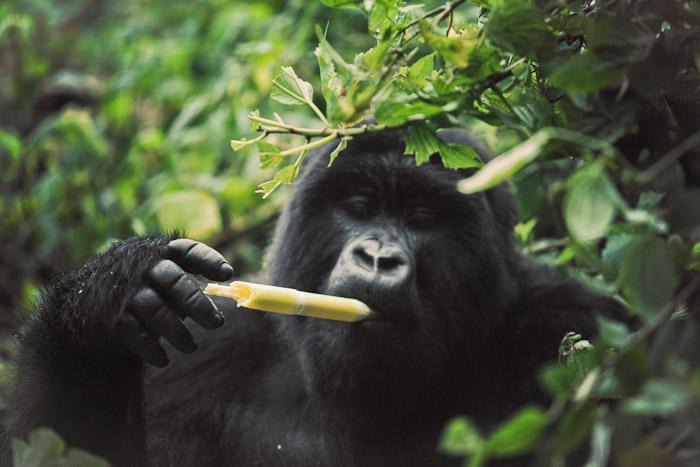Rwanda Small-23