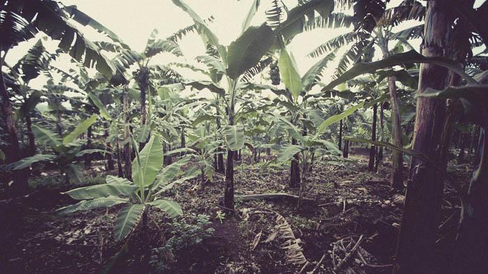 Rwanda Fonerwa Small-14