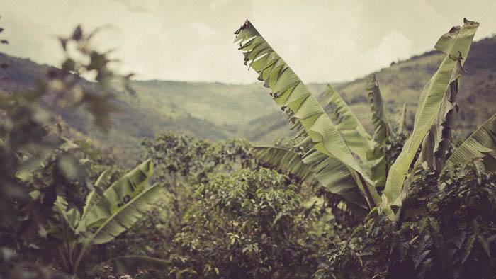 Rwanda Fonerwa Small-2