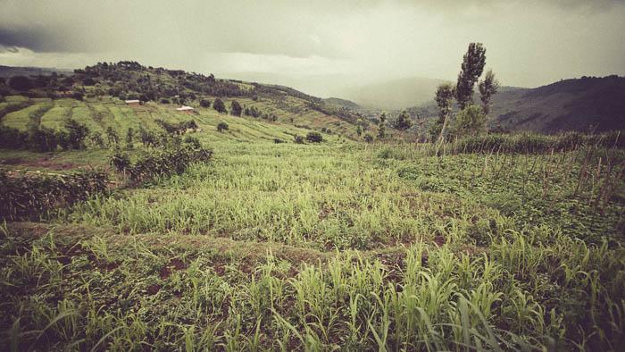 Rwanda Fonerwa Small-21